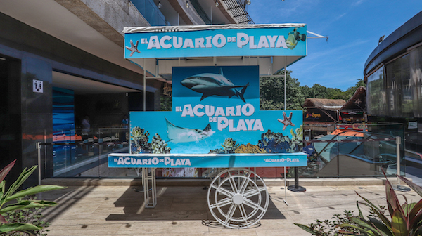 Playa del Carmen's aquarium offers respite from the rain and a chance to see over 200 marine species.