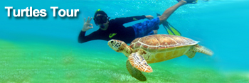 Turtles Tour and Centoes