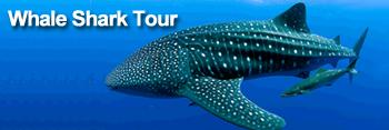 Whaleshark Tour<a name='whaleshark'></a>